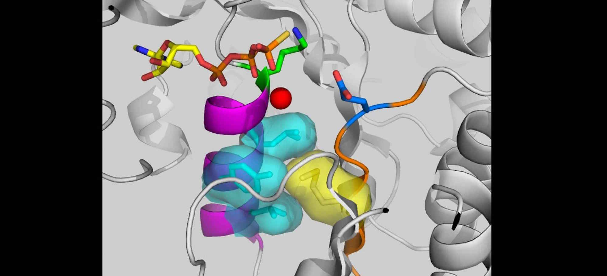 Enzyme may help bacteria become craftier and more dangerous