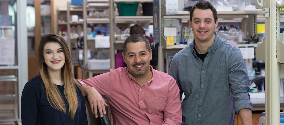 Scientists gain insight into the earliest changes that impair motor function during aging