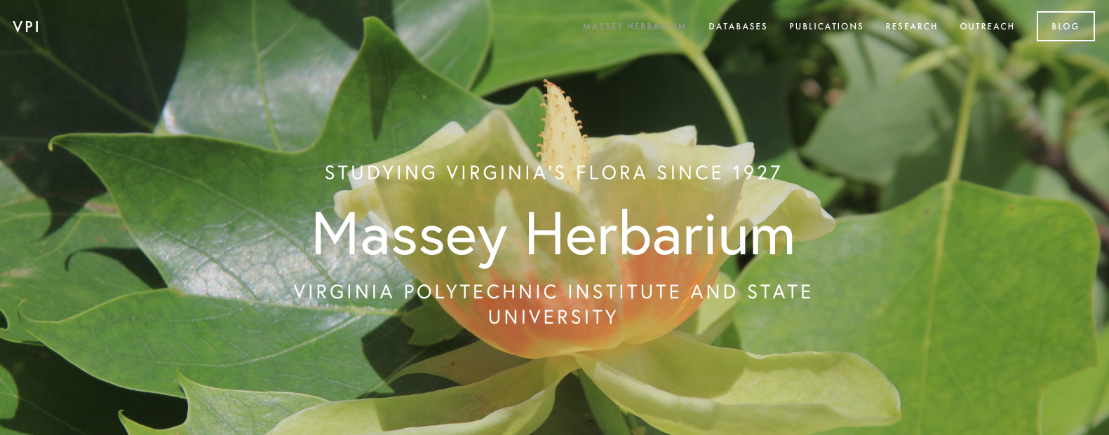 Take a look at the Massey Herbarium's new website!